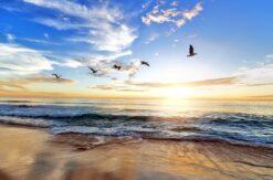 Escuchar sonidos de la naturaleza te ayuda a conseguir tu paz interior