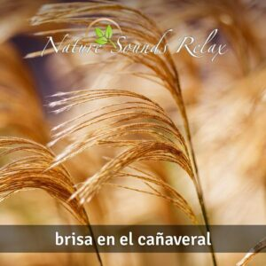 Nature Sounds Relax - Episodio 12 Brisa en el cañaveral