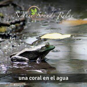 Nature Sounds Relax - Episodio 19 Una coral en el agua