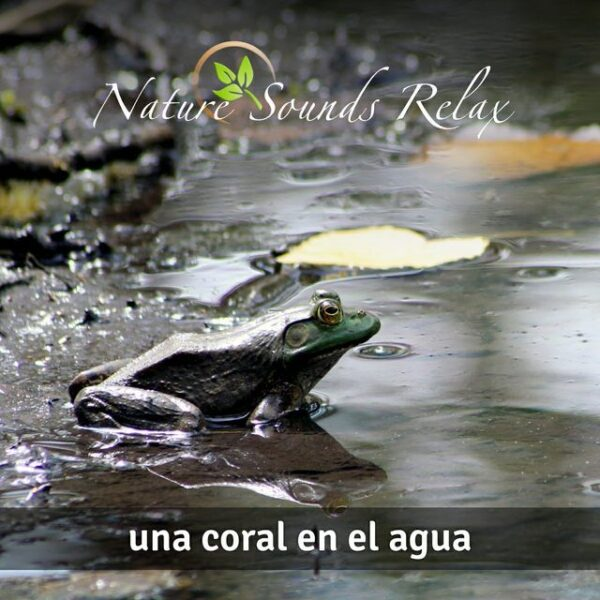 Nature Sounds Relax - Episodio 19 Una coral en el agua