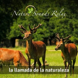 Nature Sounds Relax - Episodio 21 La llamada de la naturaleza